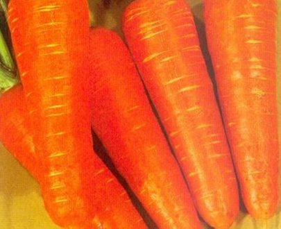 Carrot sakata seeds