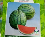 Sweet Sangria F1 Watermelon Seeds -10g Pack (East-West Seeds Brand)