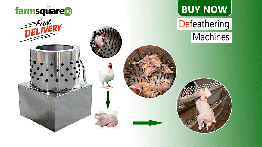Farmsquare-Defeathering-Machine-for-chickens
