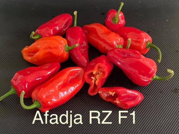 Afadja RZ F1 Pepper Seeds (100)
