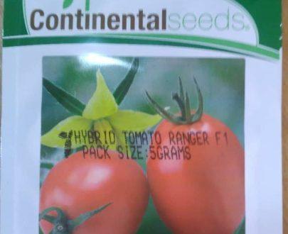 Ranger F1 Hybrid Tomato (Continental Seeds   5g)