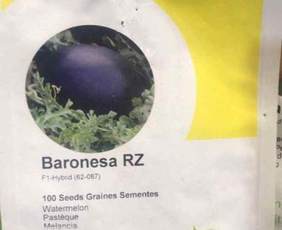 Baronesa RZ F1 Watermelon (Rijk Zwaan | 100 seeds)