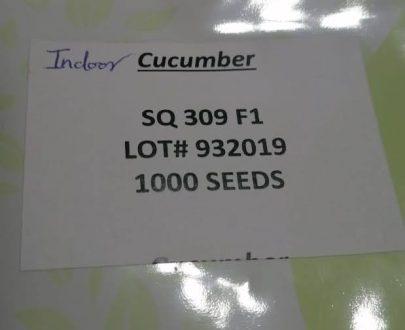 cucumber avenue seeds SQ 309 F1