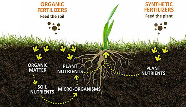 Types, Names, Uses And Benefits of Fertilizers
