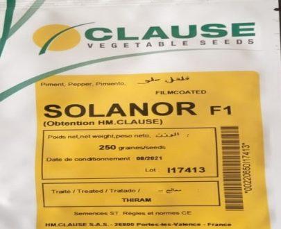 Solanor F1 Bell Pepper